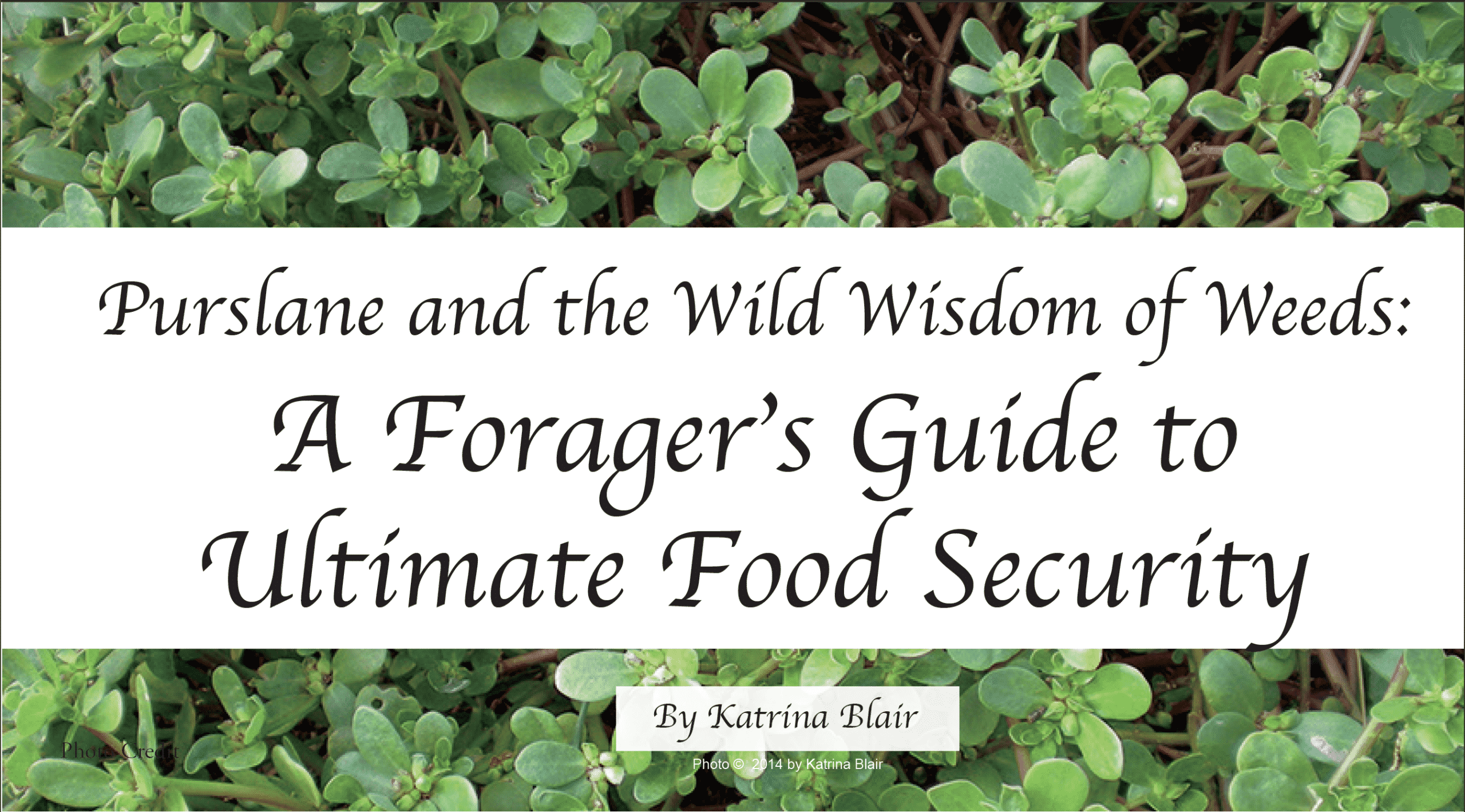 A Forager's Guide to Ultimate Food Security